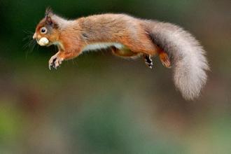 Squirrel attack
